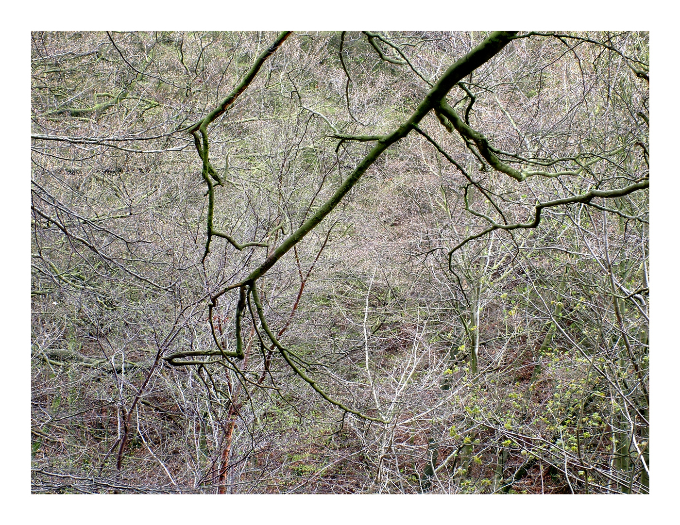 Limb Valley #1, 2006
