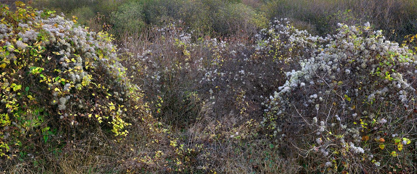 Blackburn Meadows #3-3, 2012