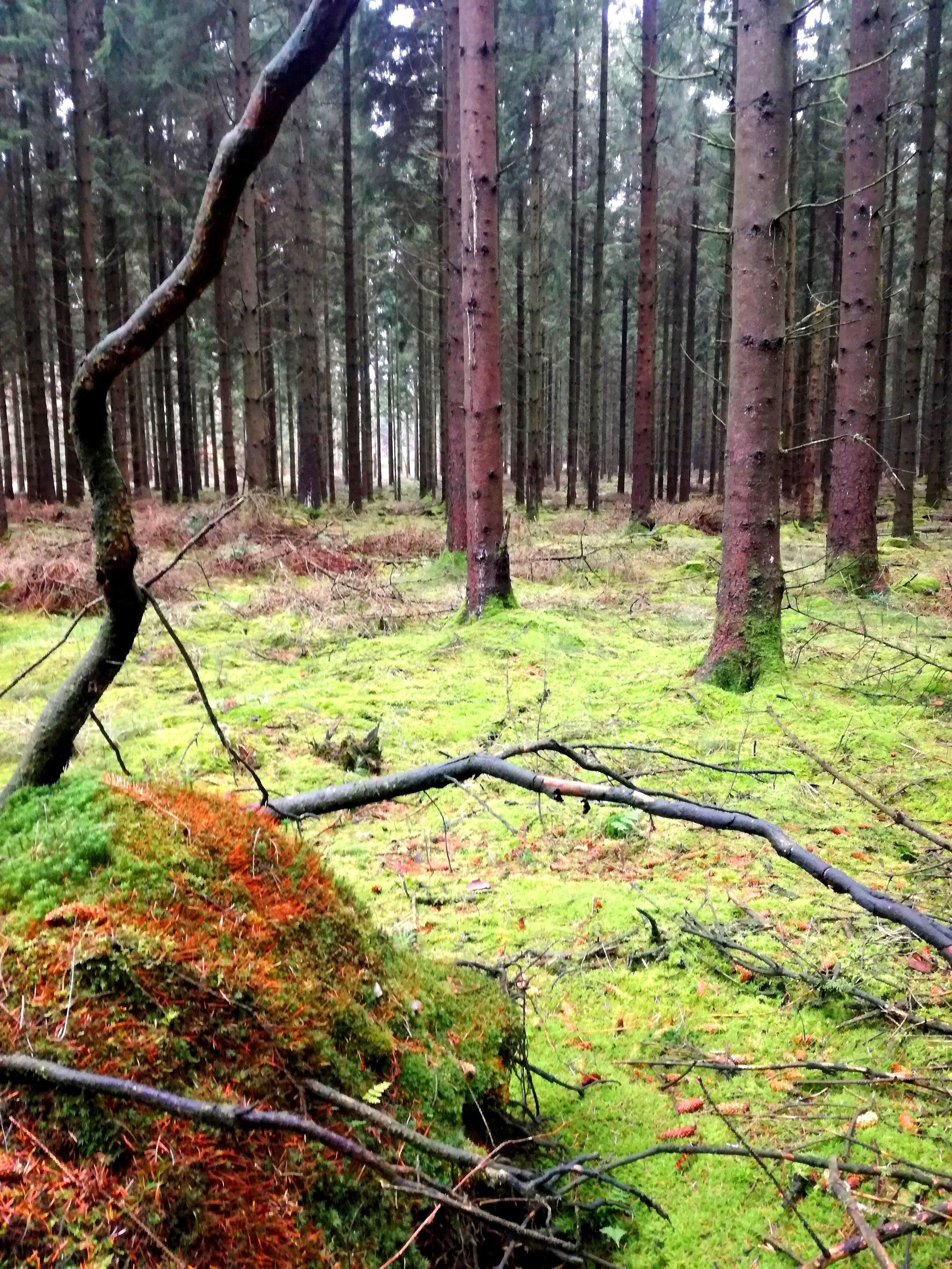Gødding skov 4.jpg
