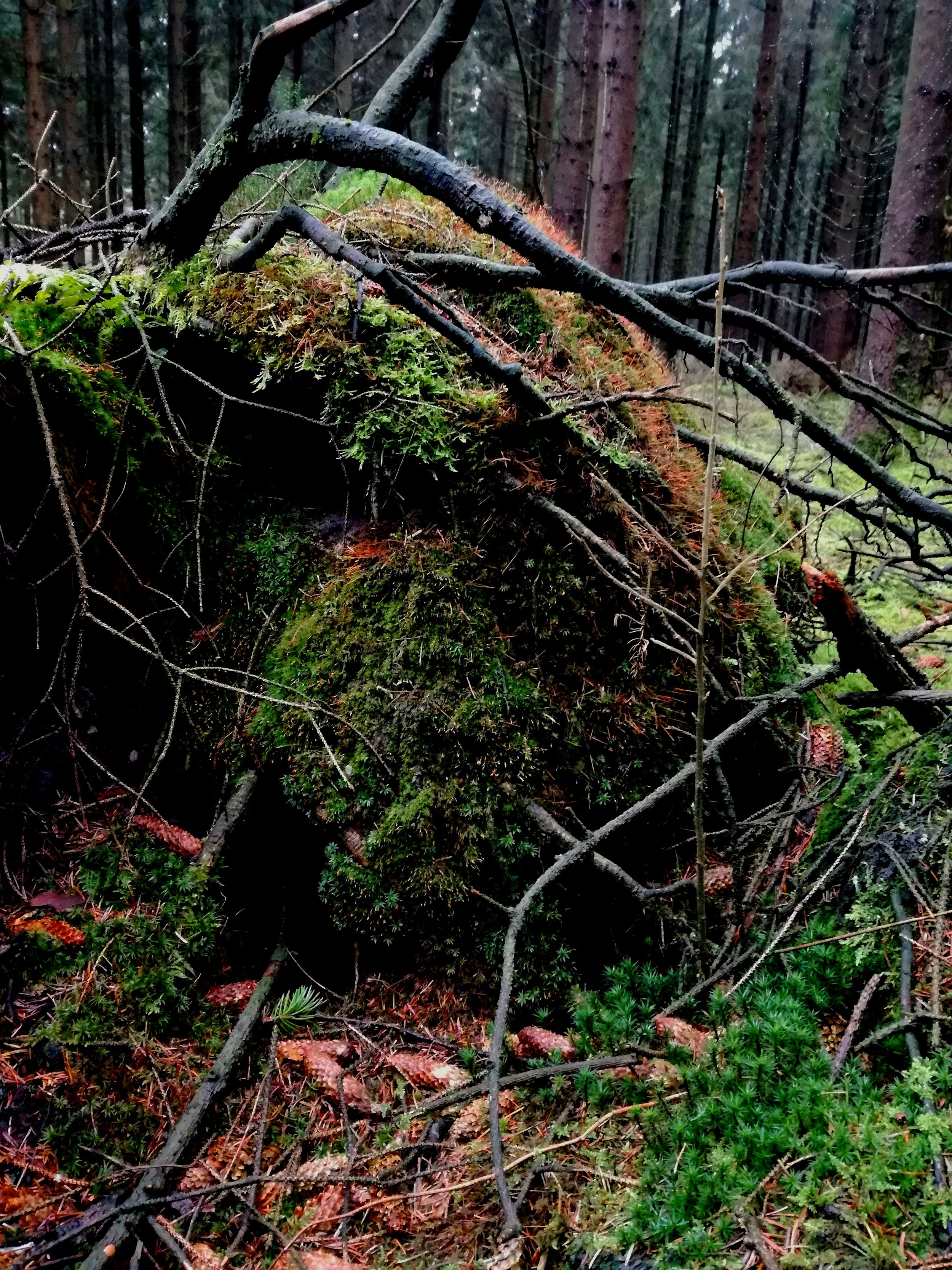 Gødding skov 5.jpg