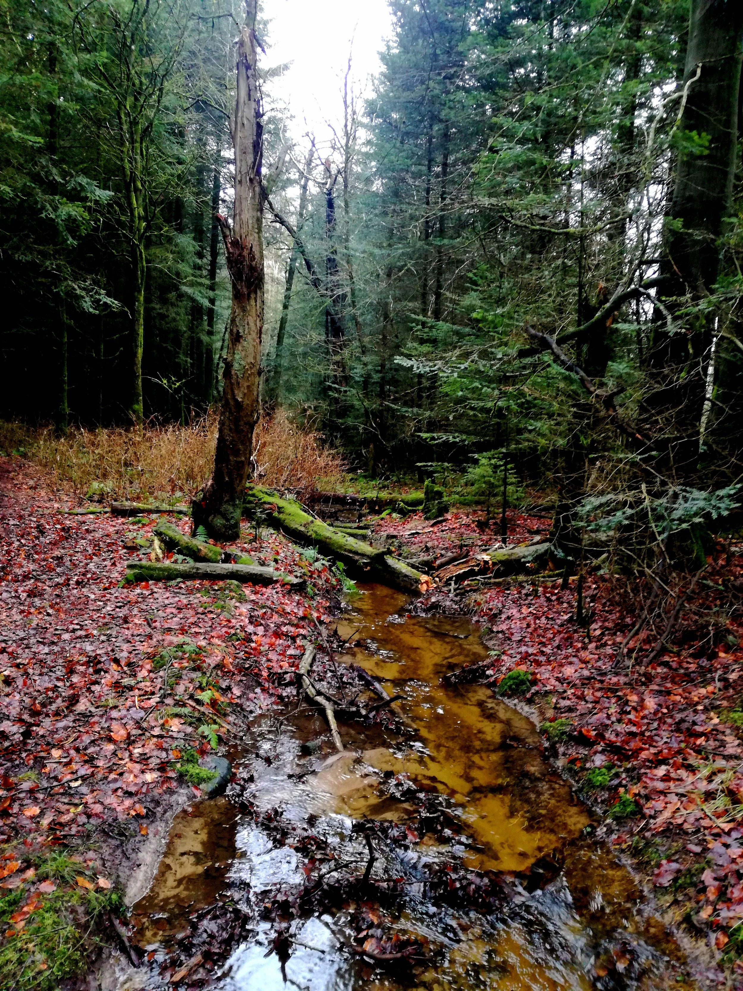 Gødding skov 7.jpg