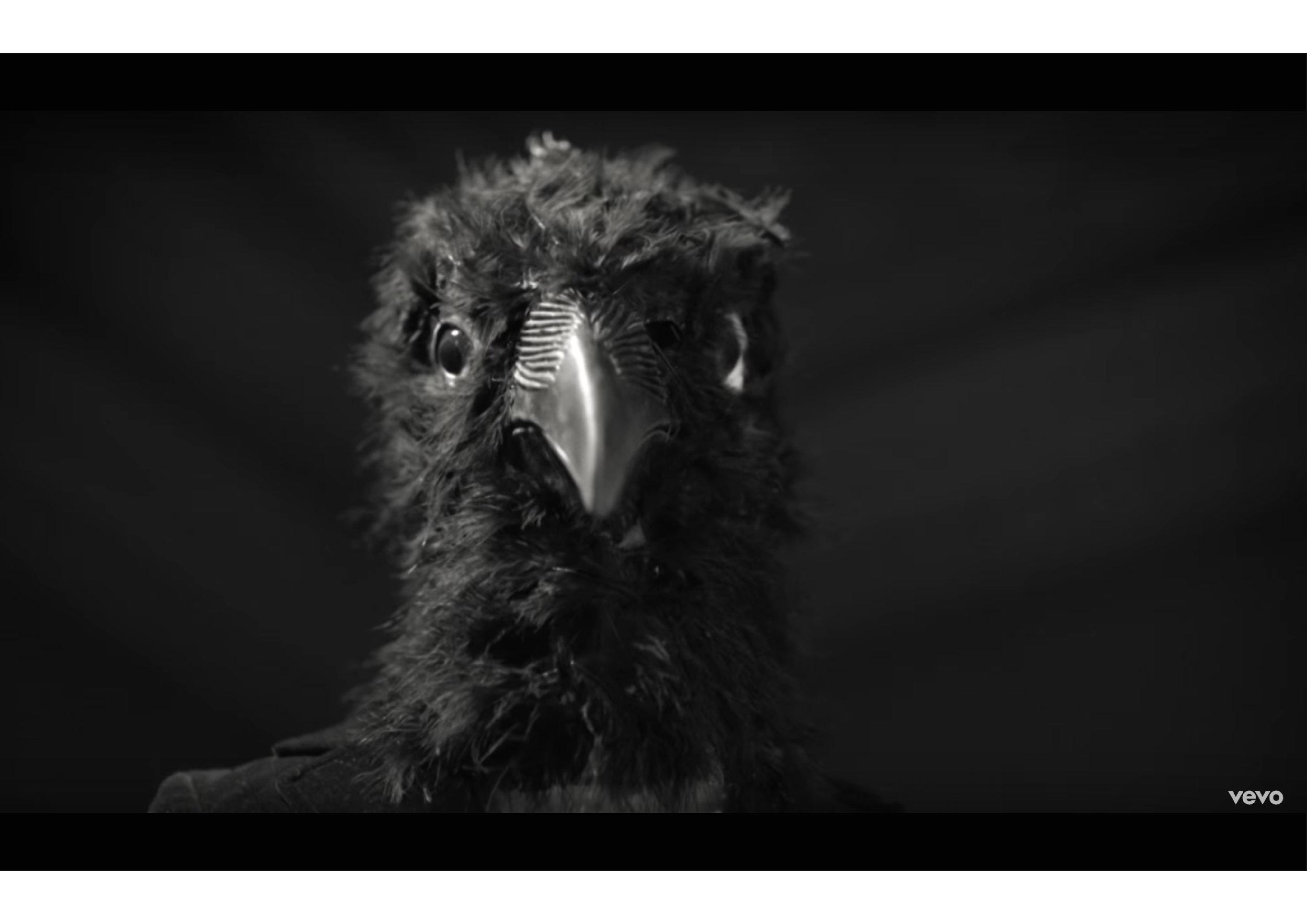 bird head-03.jpg