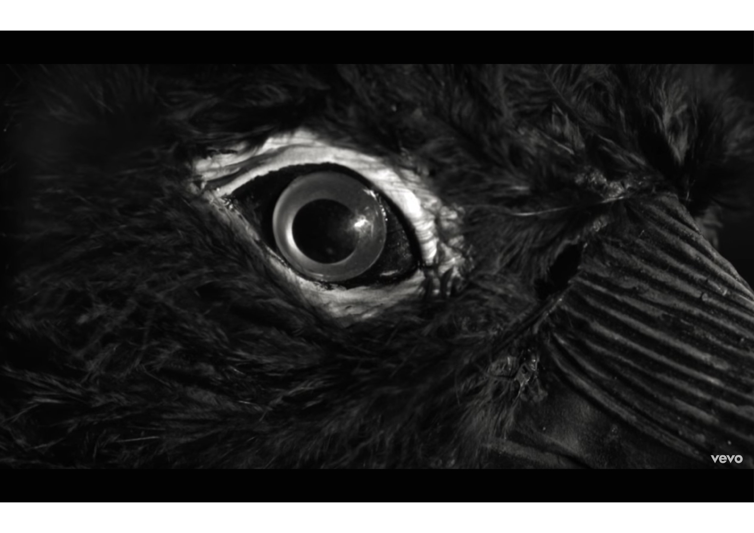 bird head-04.jpg