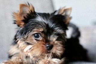 A happy pup is a healthy pup… -