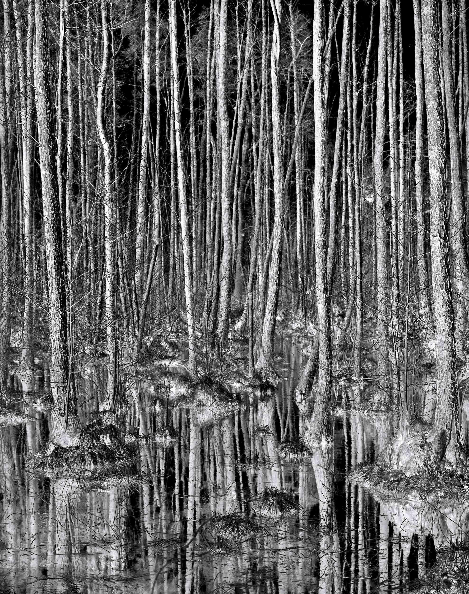 Black_Forest_Glusgold_02.jpg