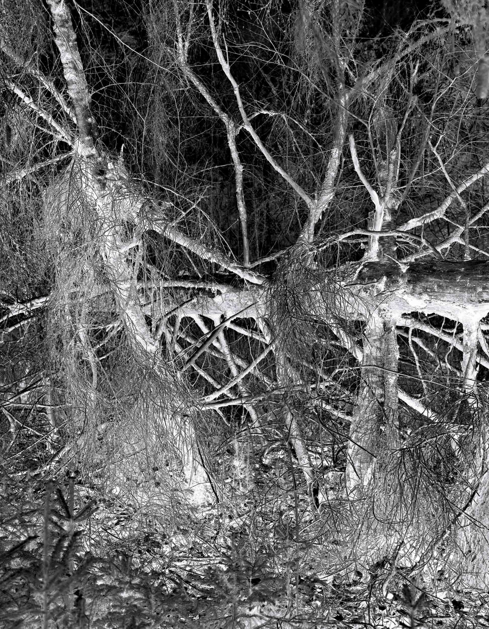 Black_Forest_Glusgold_04.jpg