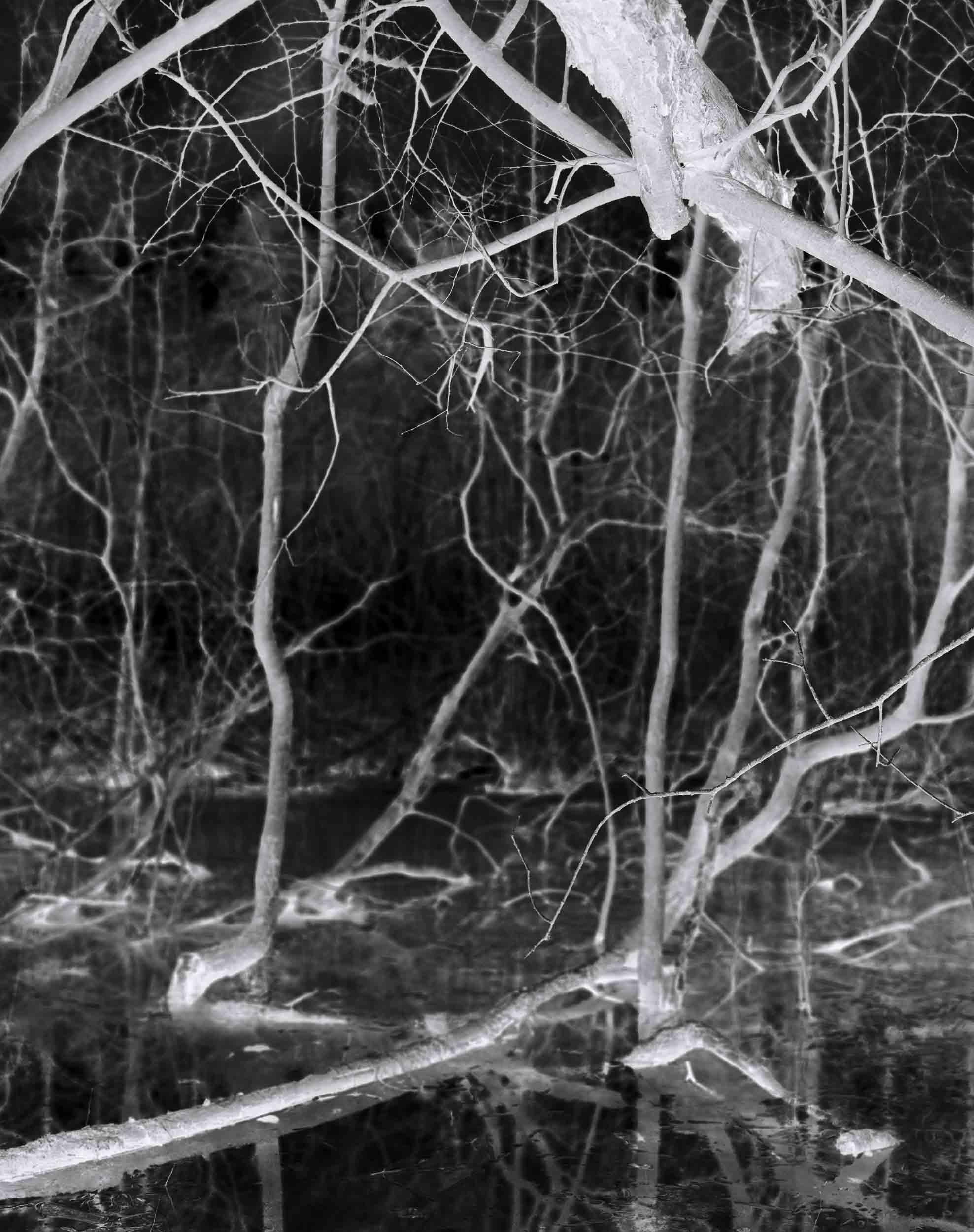 Black_Forest_Glusgold_05.jpg