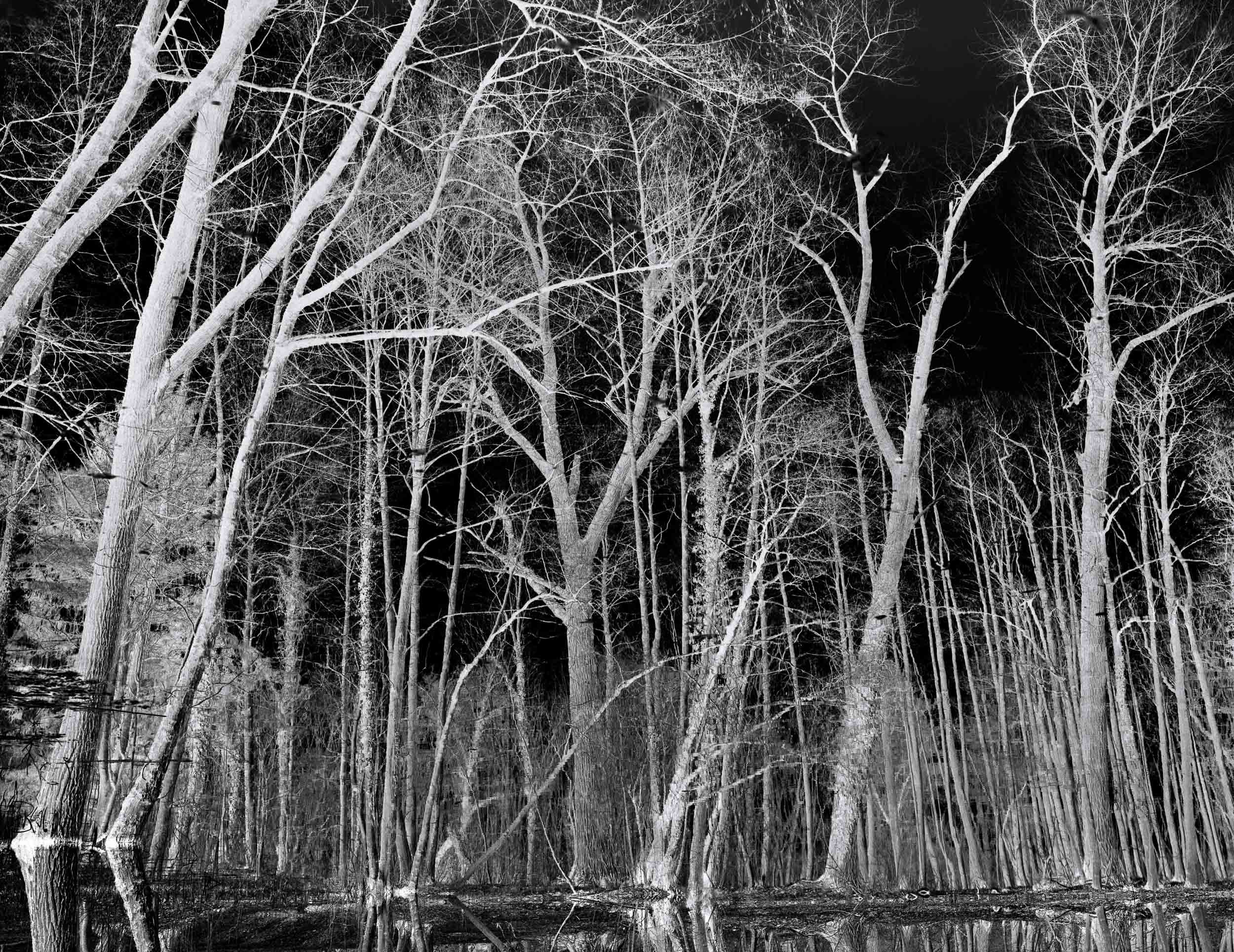 Black_Forest_Glusgold_11.jpg