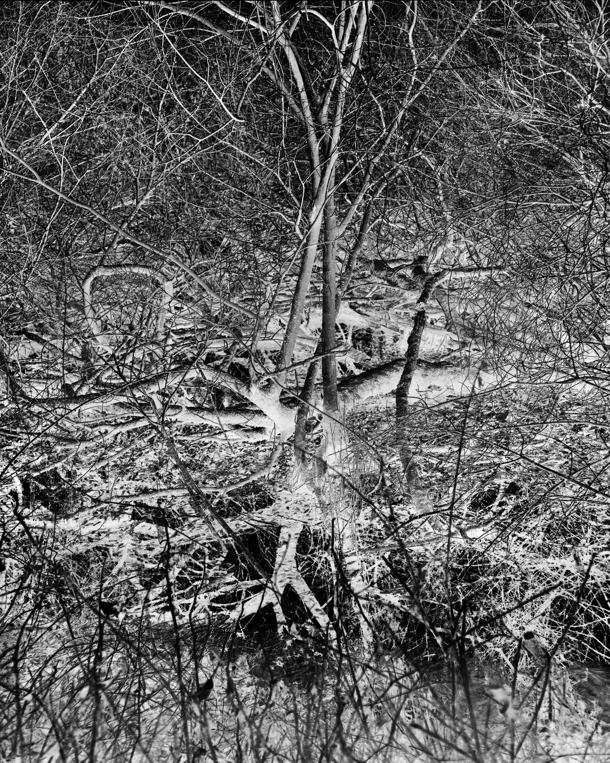 Black_Forest_Glusgold_13.jpg
