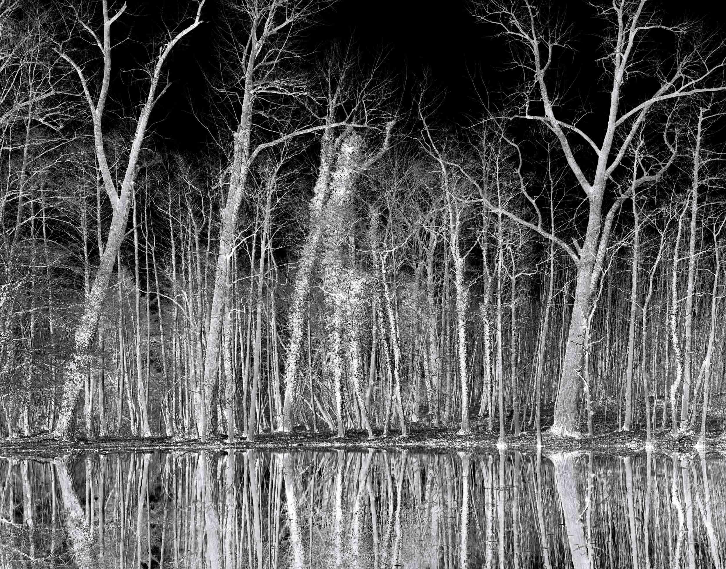 Black_Forest_Glusgold_01.jpg