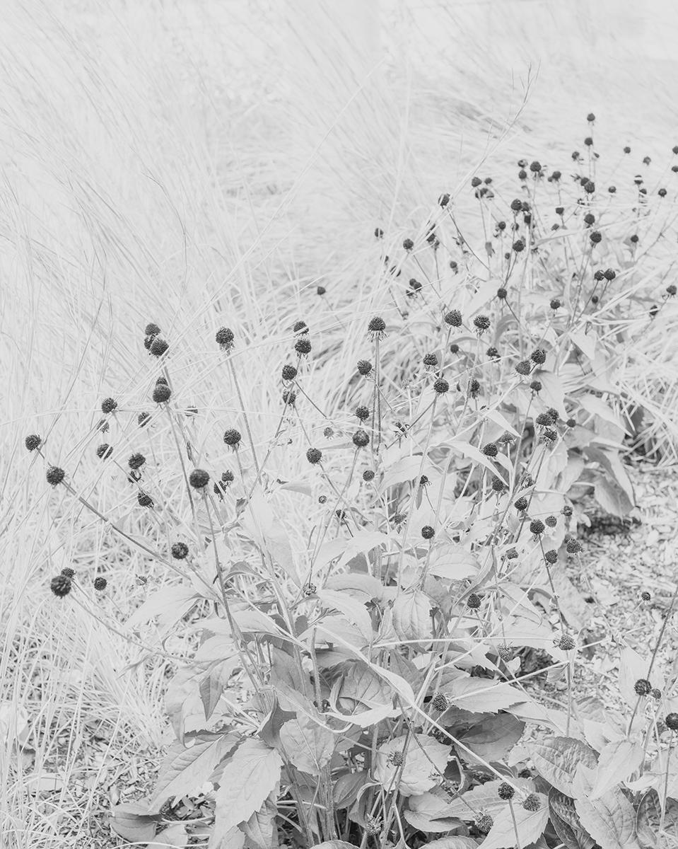 Untitled (Vegetation 1), Massachusetts, 2014