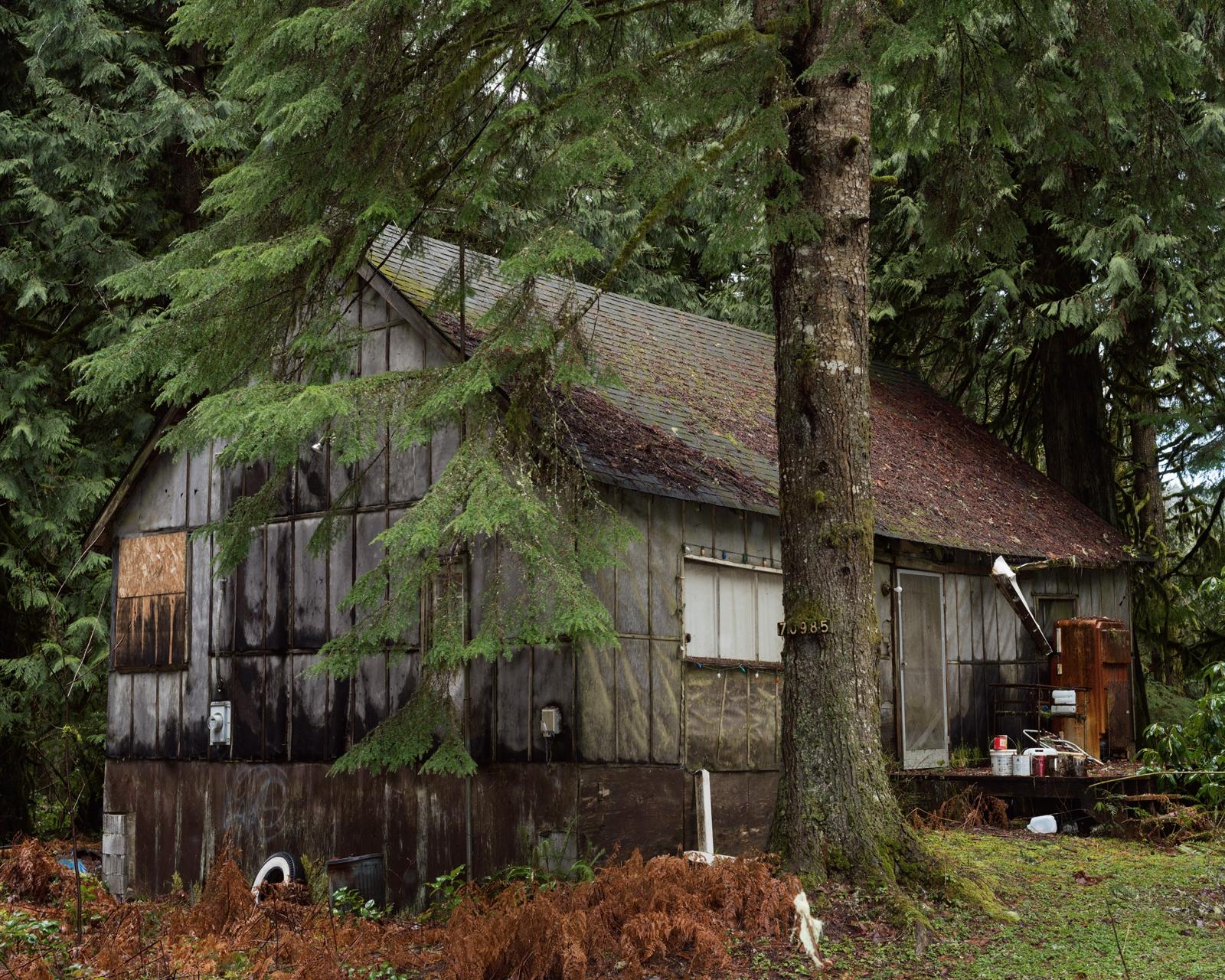 Cabin Woods