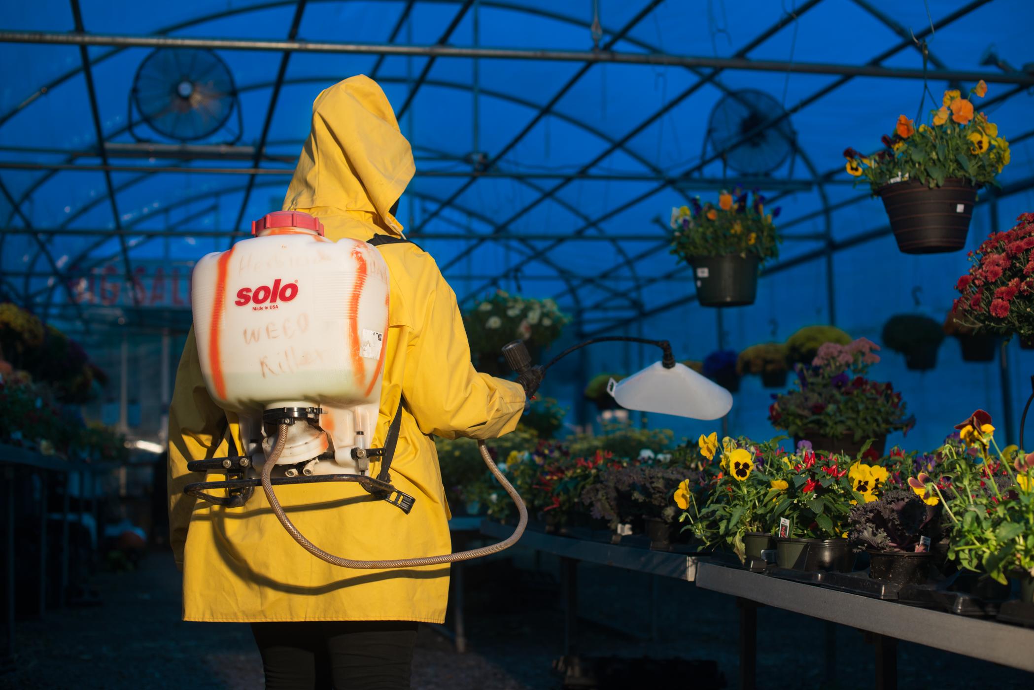 Solo Herbicide Preemergence , 2016
