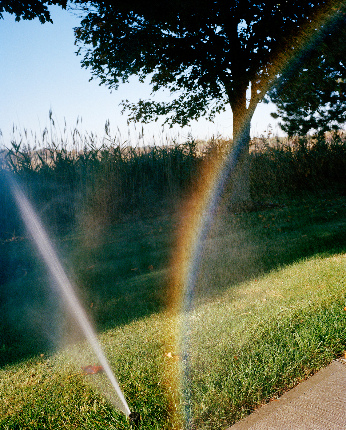 Rainbow Mist, 2016
