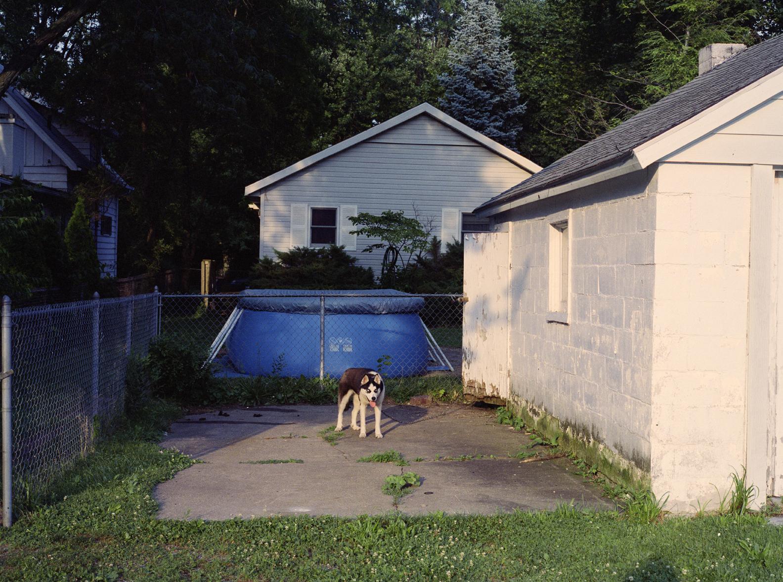 Husky, 2010