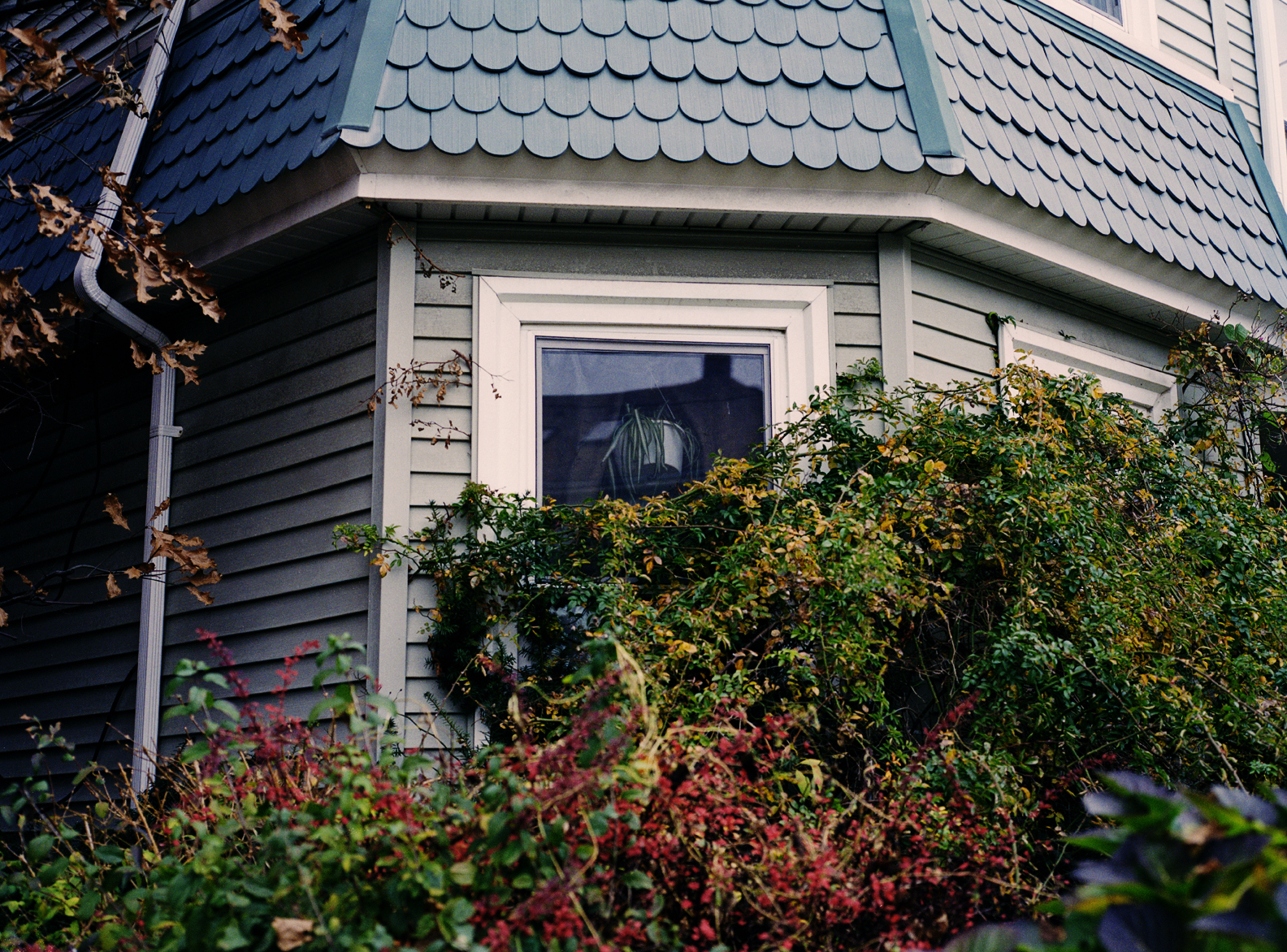 Houseplant, 2011