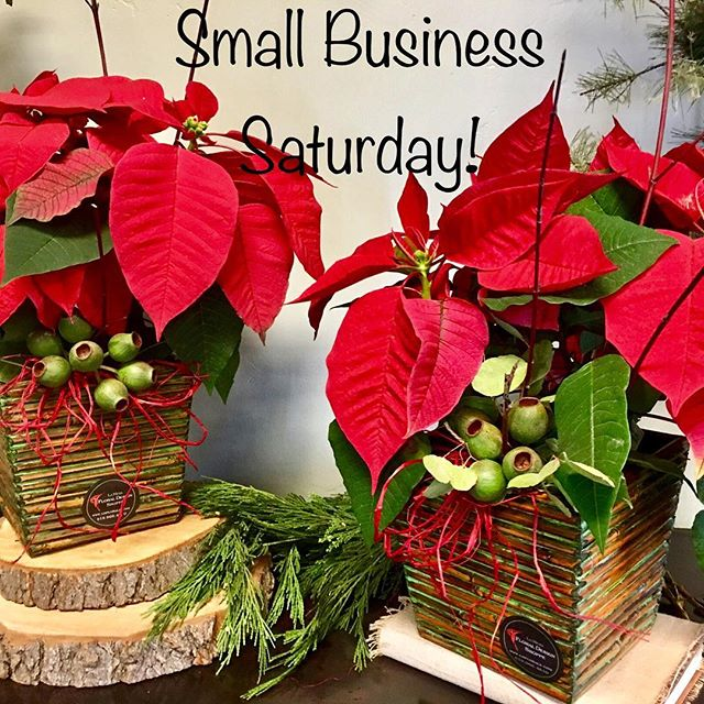 Small Business Saturday! We have poinsettia specials and can custom design your poinsettia!  15% off all Day 9-5. #lamesavillage #lamesa #grossmonthighschool #lamesachamberofcommerce