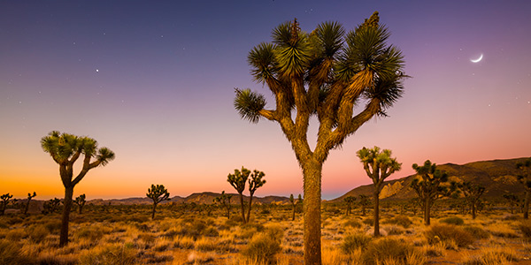 plant_joshua-tree_KiskaMedia-GettyImages_600x300.jpg