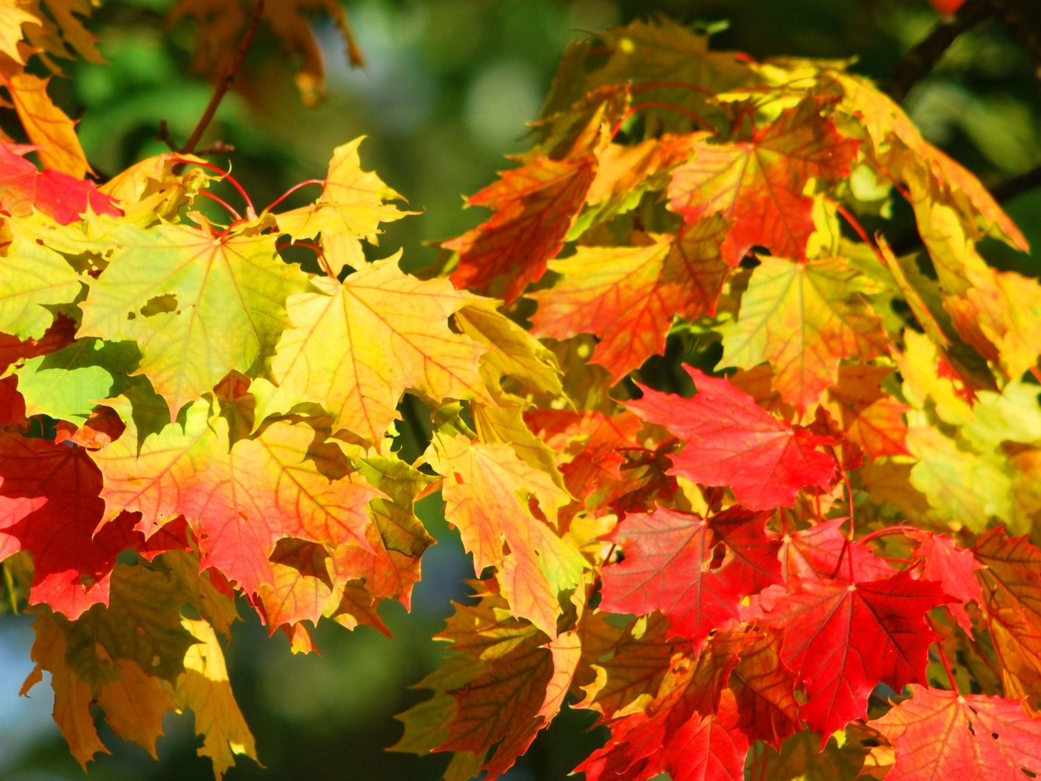 autumn-fall-foliage-leaves-63614.jpg
