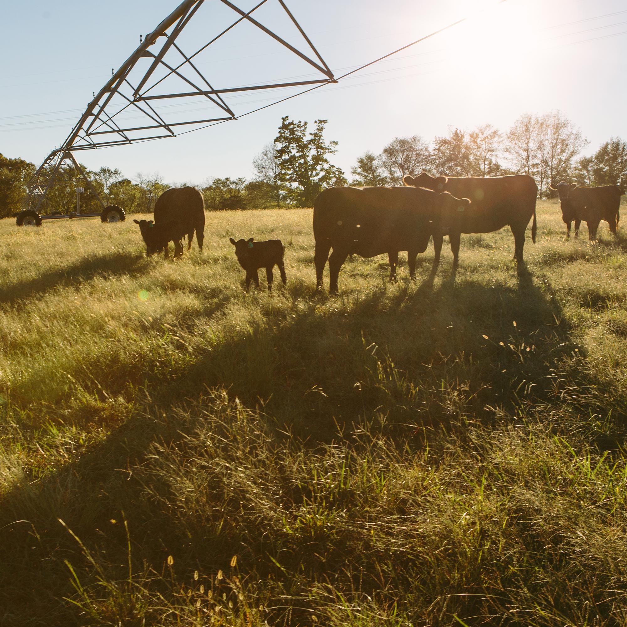 PASTURE RAISED - 100% pasture raised on all natural local forages