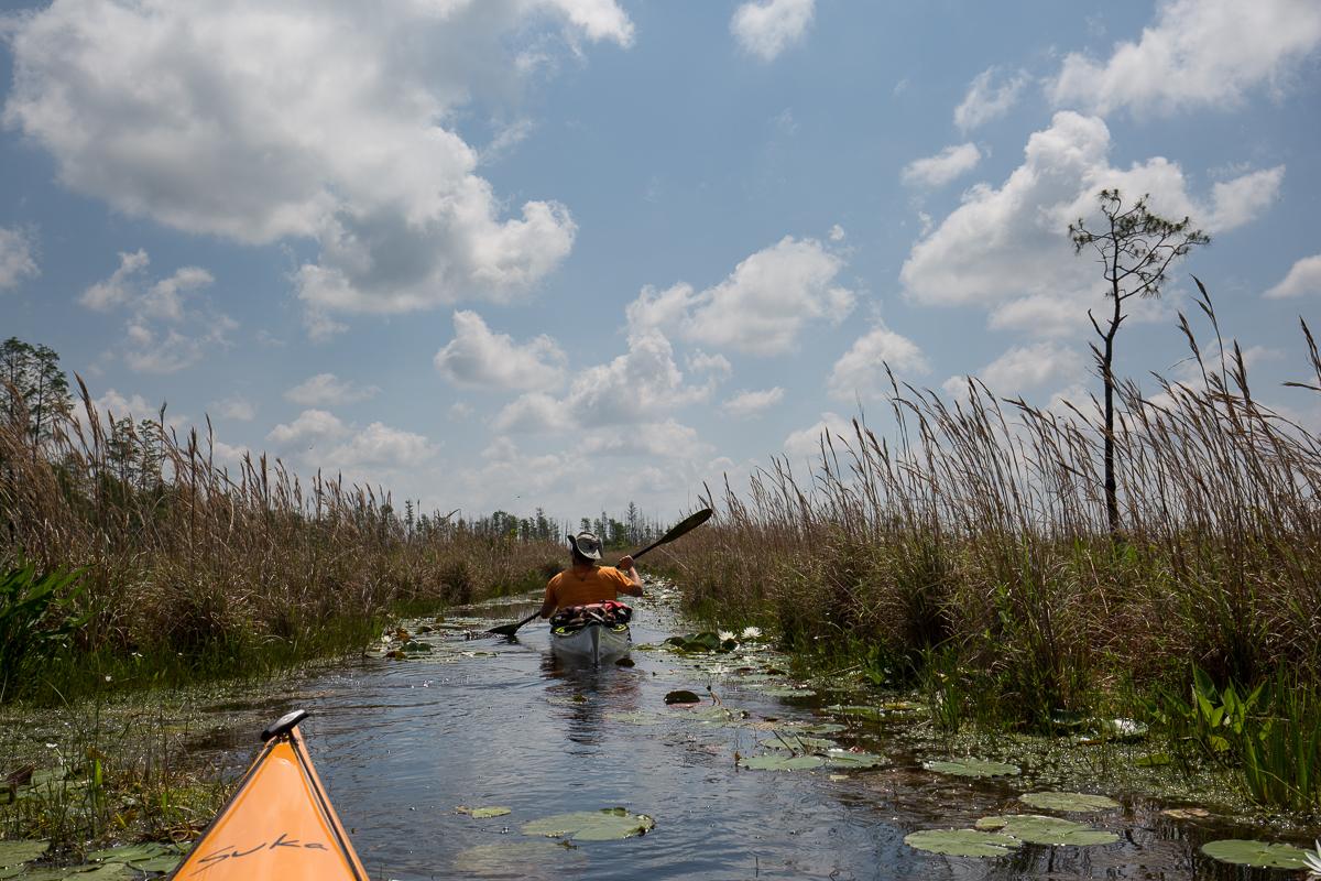 the narrow corridors in the okefenokee swamp