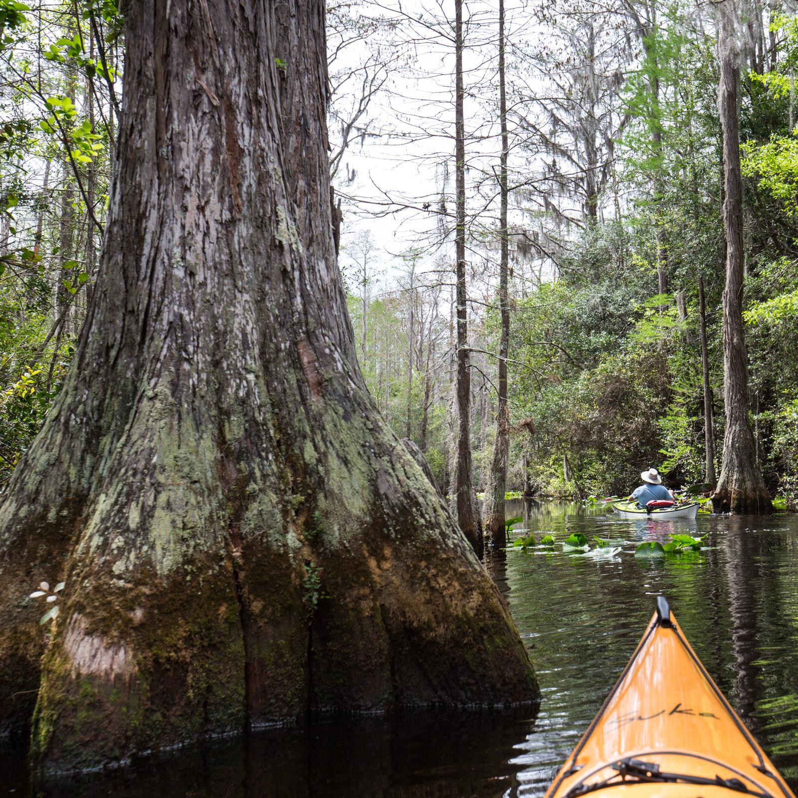 Kayaking Pinball Alley