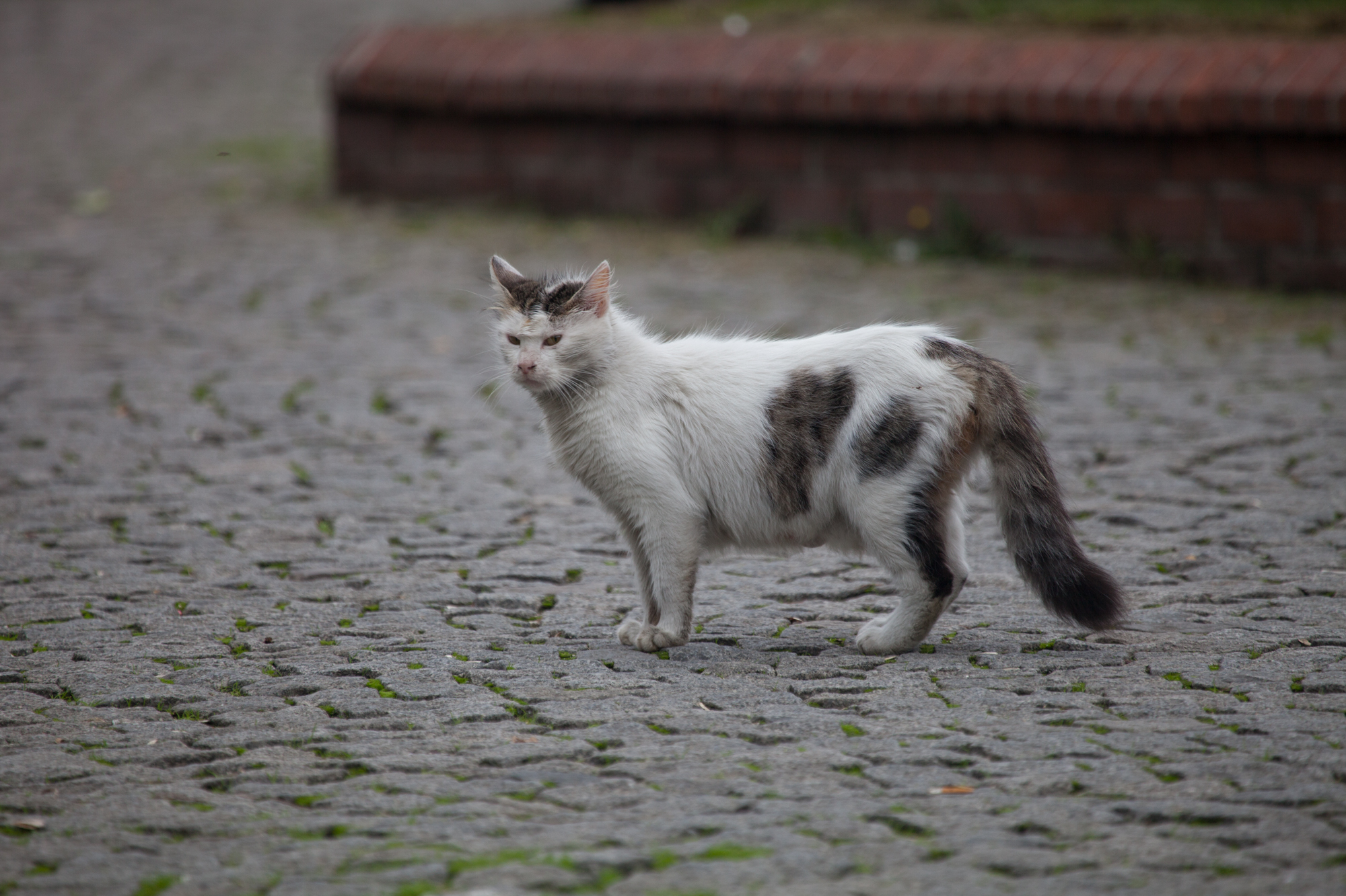 You know exactly where you stand with the cats of Istanbul - photo: Barry Scully