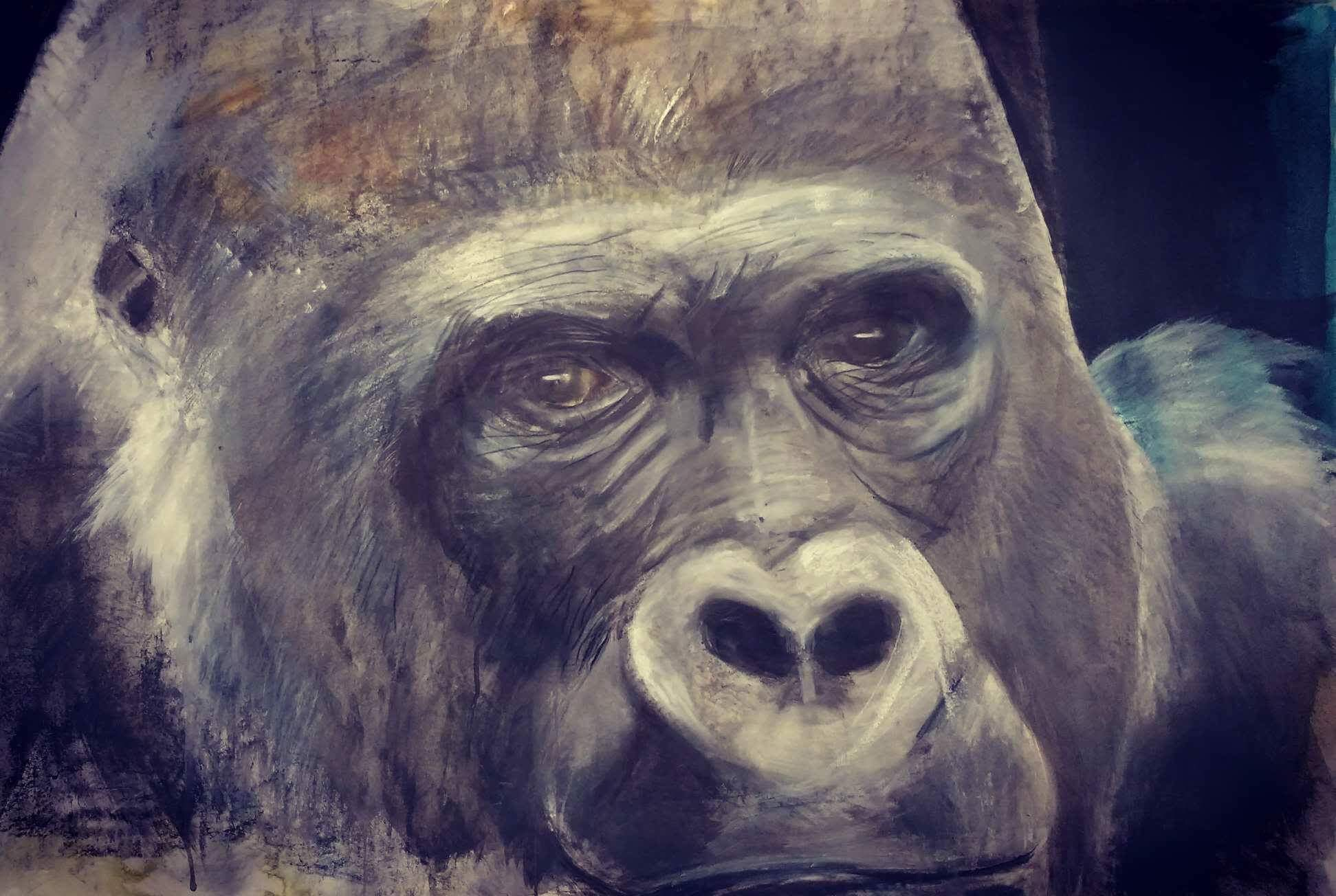 "RUSS RONAT   Western Lowland Gorilla   Original Drawing  Mixed Media  42 X 31"""