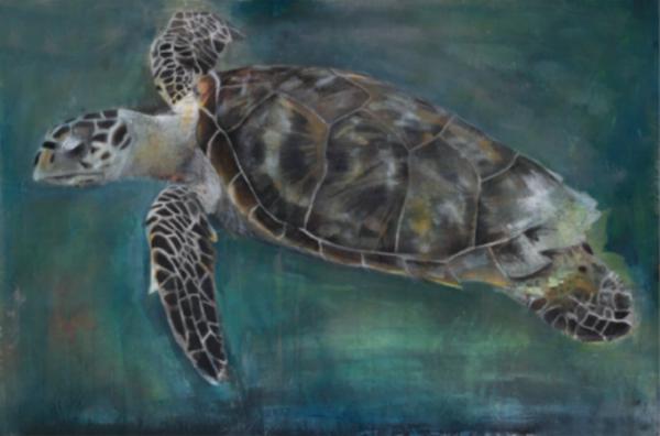 """RUSS RONAT   Hawksbill Sea Turtle   Illuminated Light Box Print  12 X 12"""""""