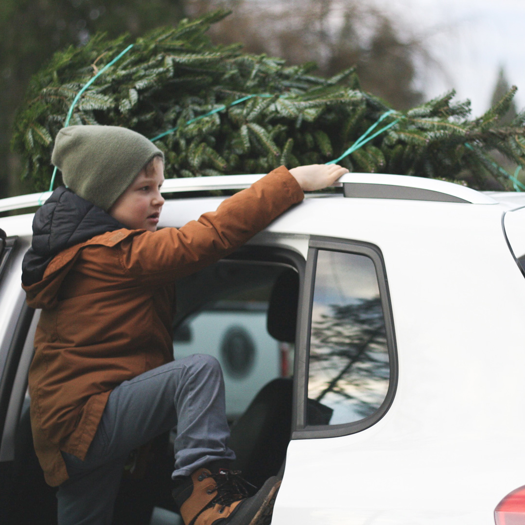 U-cut and Fresh-cut - Tall, wide, slender, full - we offer trees of all shapes and sizes. Our large selection includes: Fraser Fir, Balsam Fir, Douglas Fir, Blue Spruce, White Fir, Canaan Fir, and White Spruce.