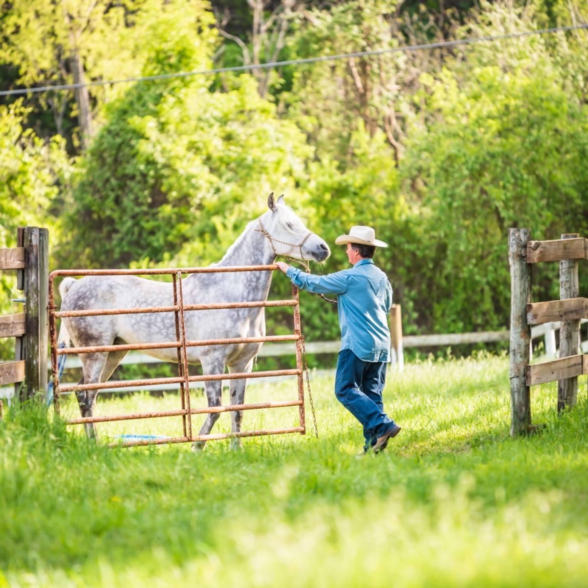 HorseGate1.jpg