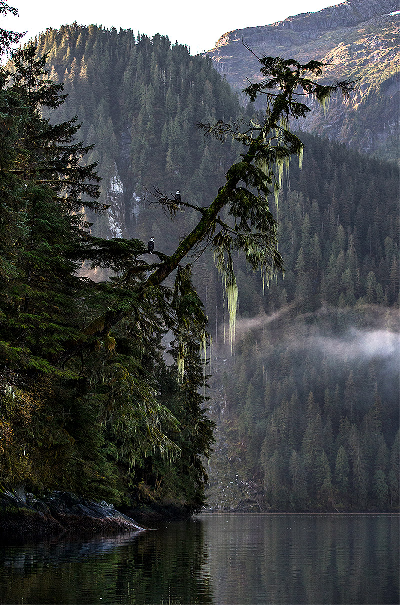 """""""These two Bald Eagles in the distance are a nice punctuation in this image that really captures the mist, moss and spectacular light."""""""