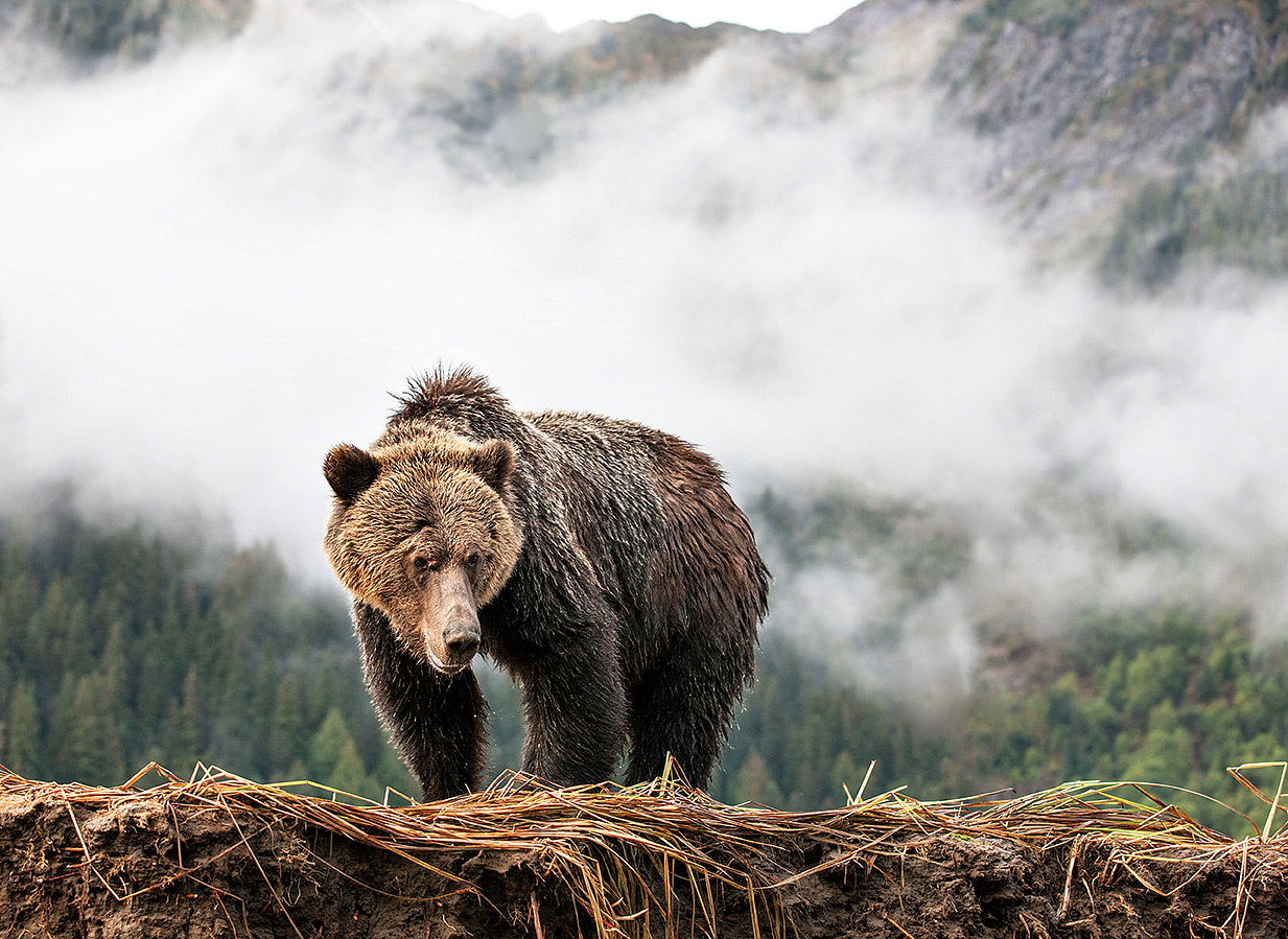 """""""Slowly cruising along the Khutze Inlet I happened upon this great creature. He seemed to be just taking in the majesty of his beautiful wilderness."""""""