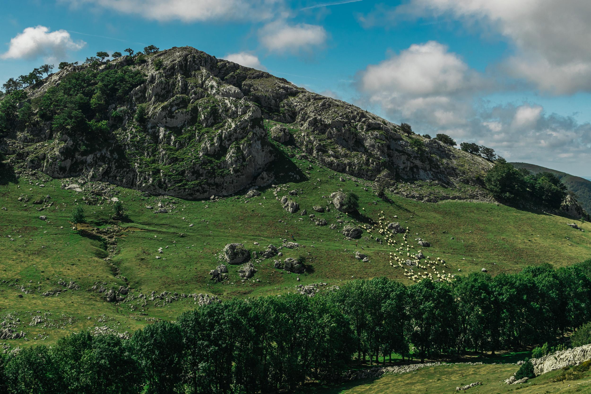 Sheep in mountaintop