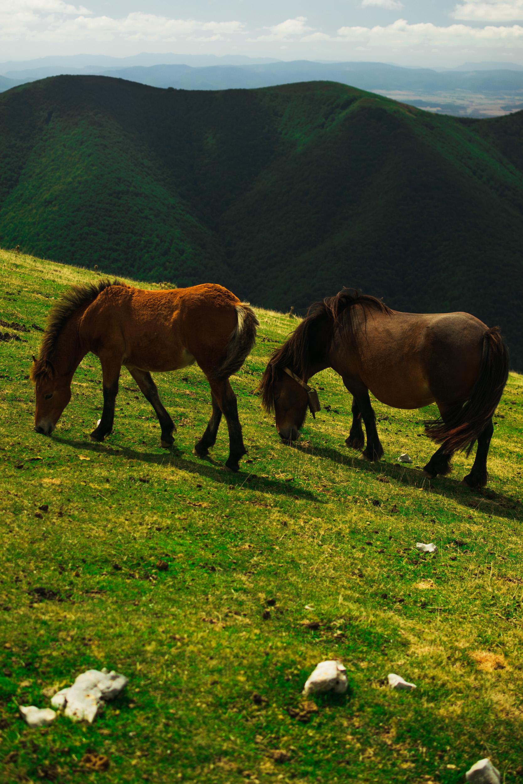 Horses and Basque Pony