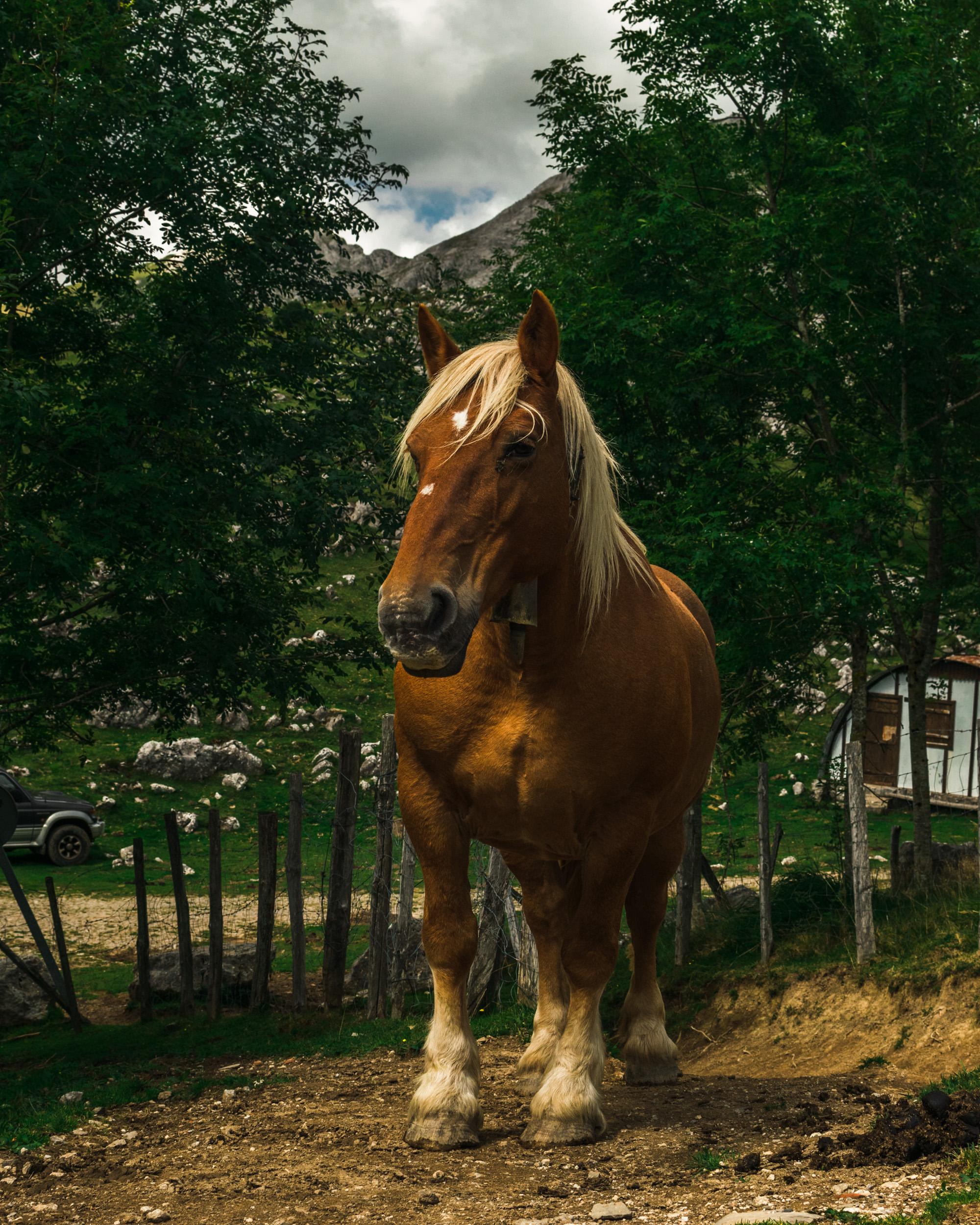 Basque Pony