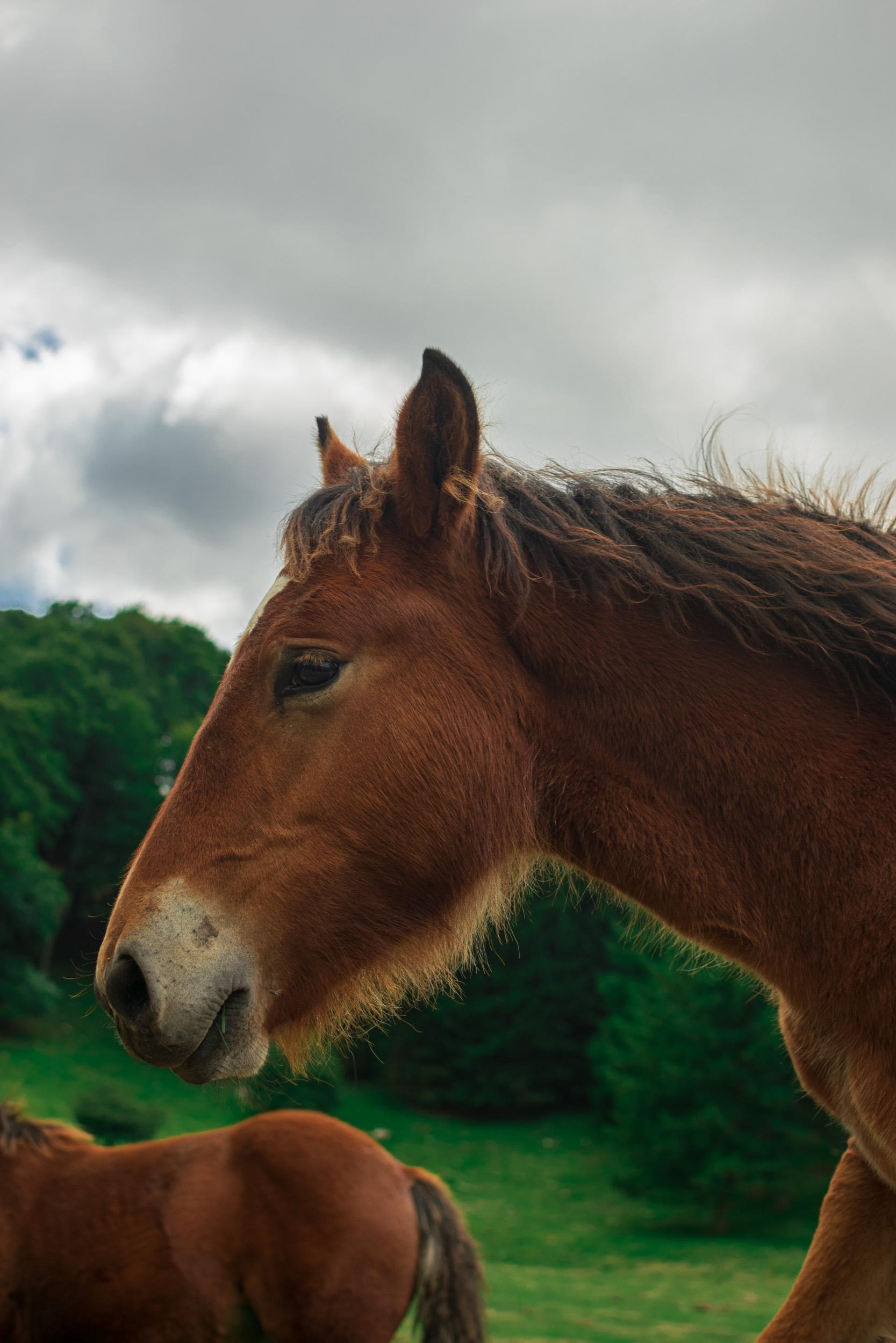 Basque Mountain Horse
