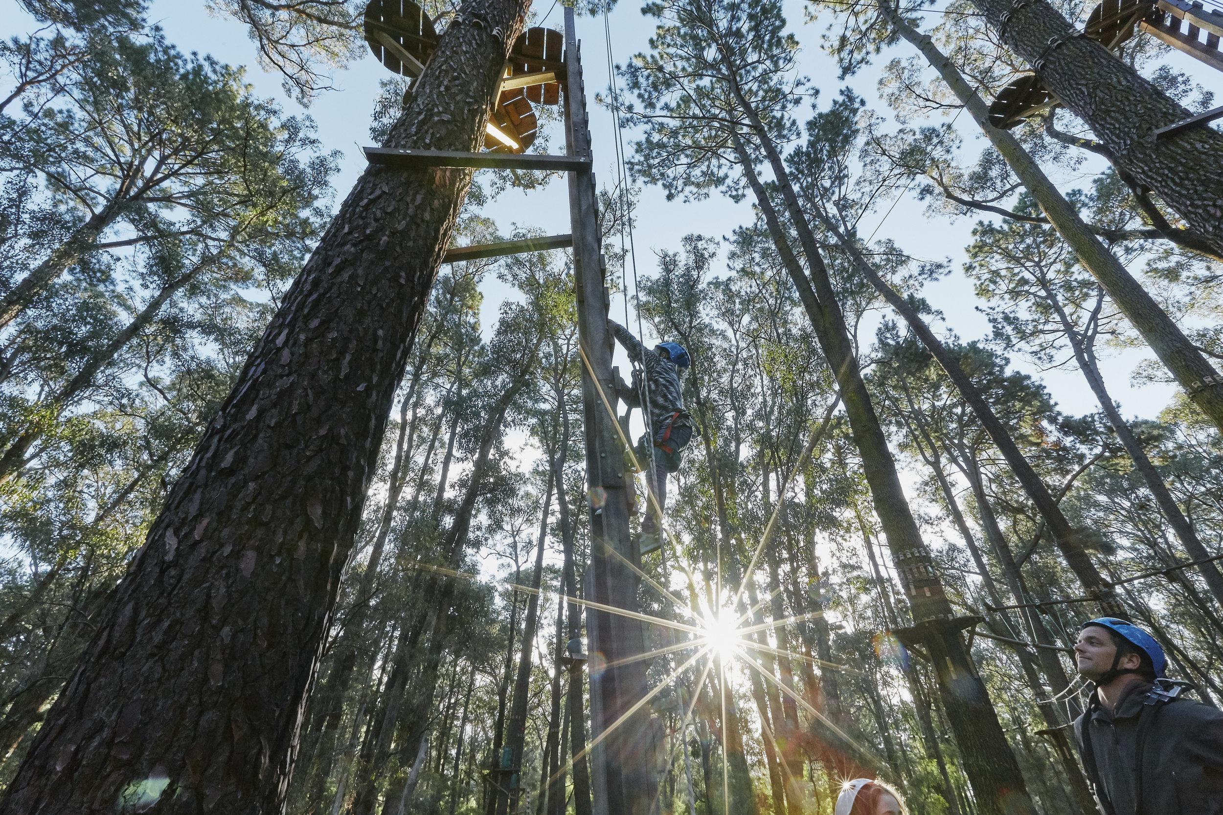 Forest_Adventures- 61.jpg