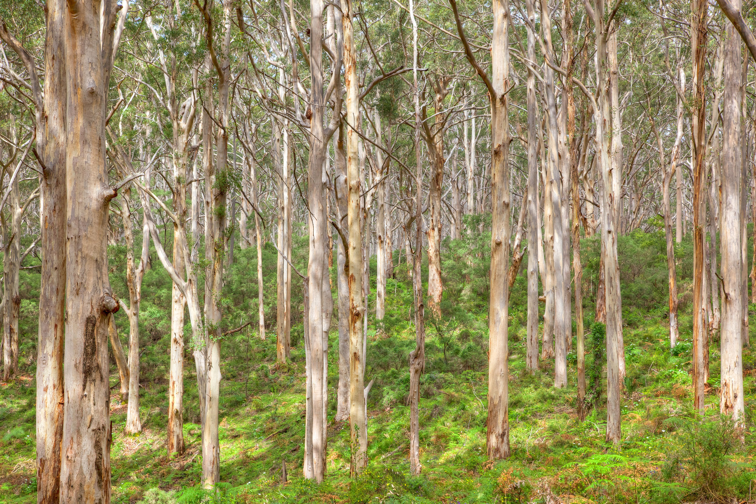 Adrenalin Hit List #6 - Surround yourself with the majesty of giant Karri trees