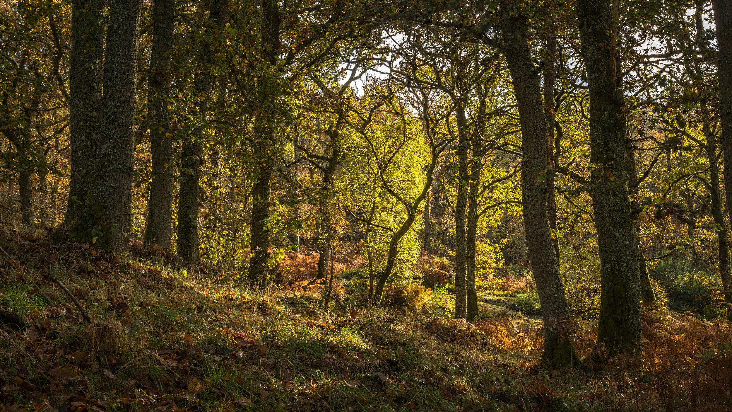 Scotland_Forests_489854_3840x2160.jpg