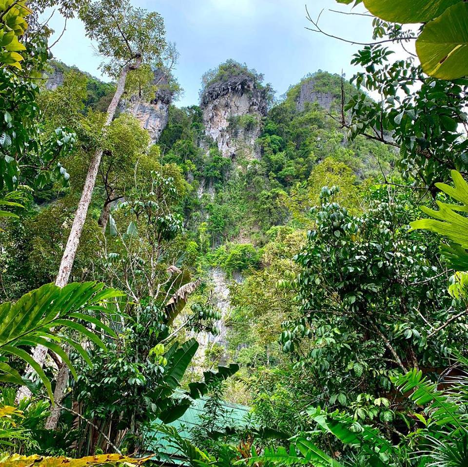 jungle hideaway