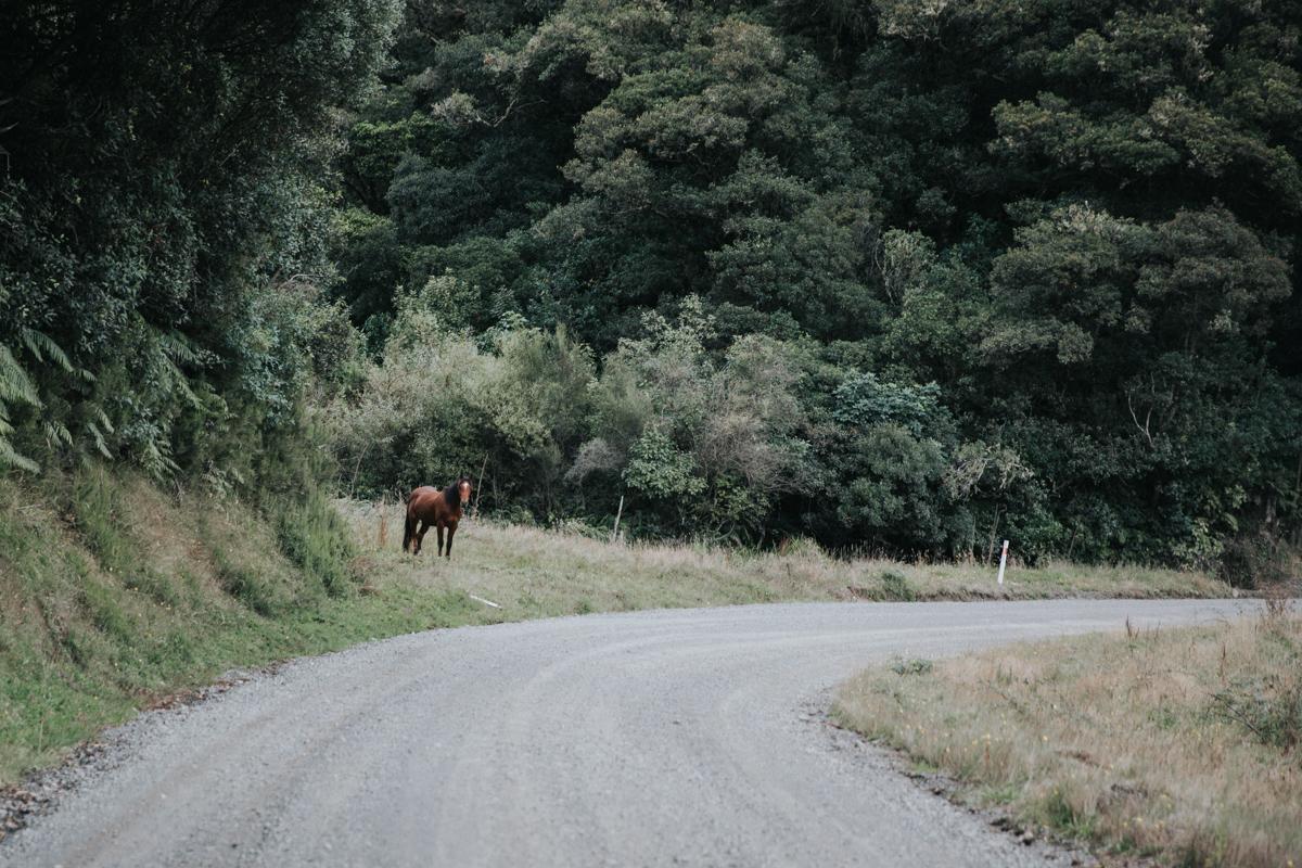 Neuseeland Teil3 (90 von 264).jpg