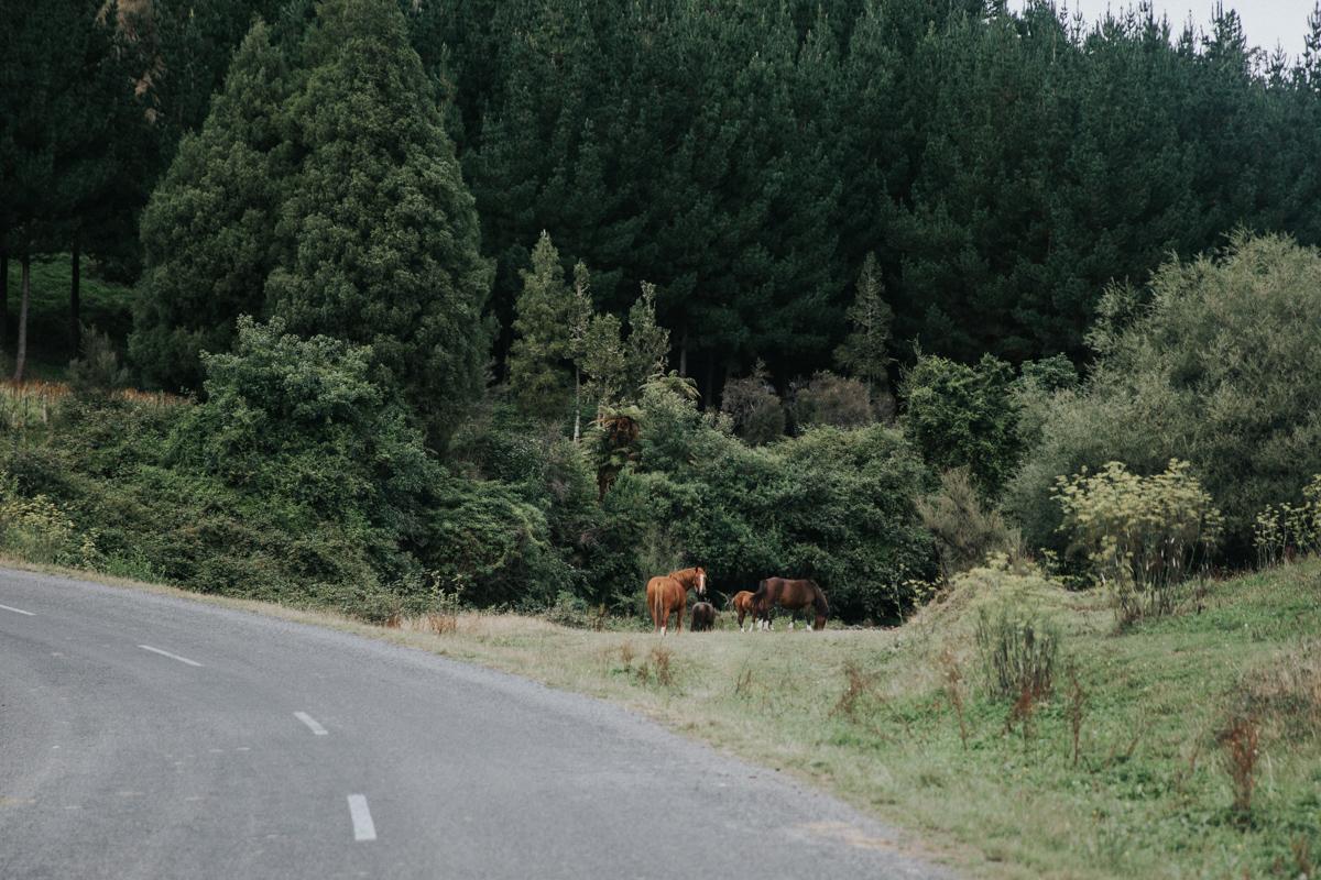 Neuseeland Teil3 (93 von 264).jpg
