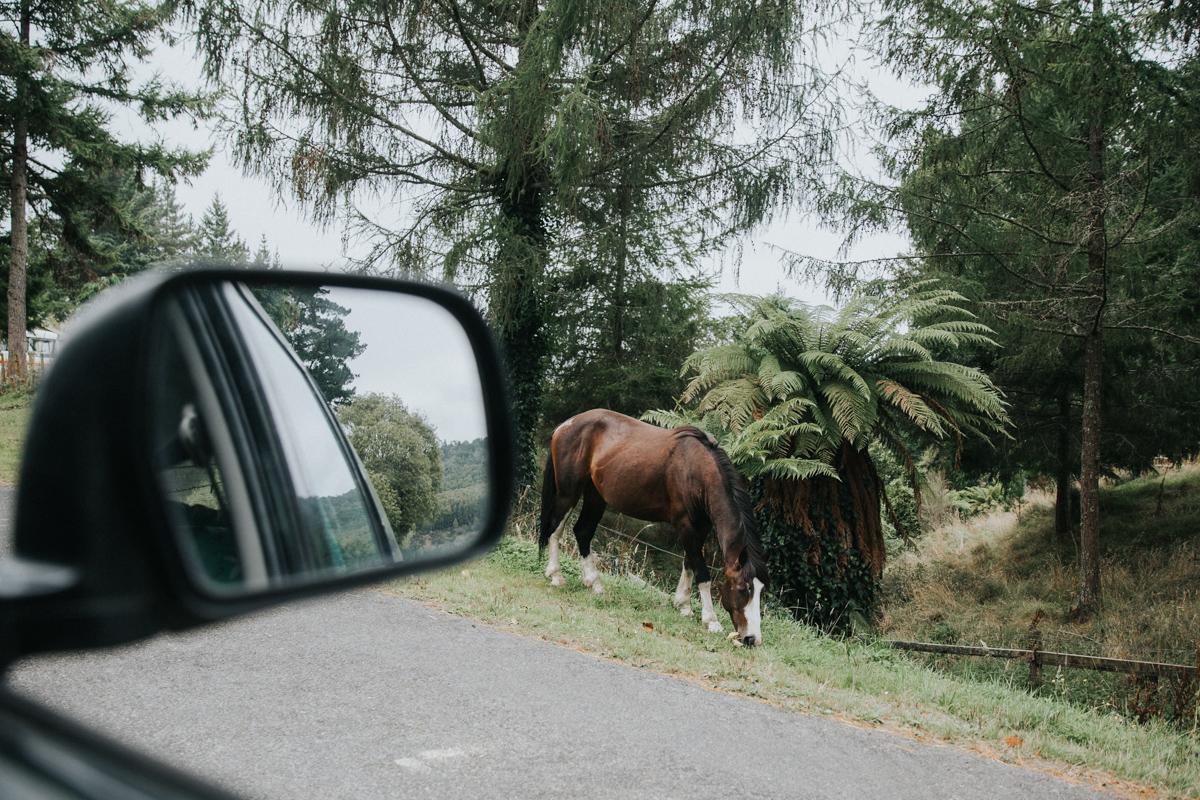 Neuseeland Teil3 (98 von 264).jpg