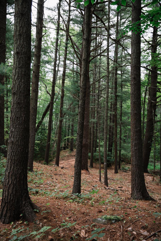 New Hampshire (50 von 82).jpg