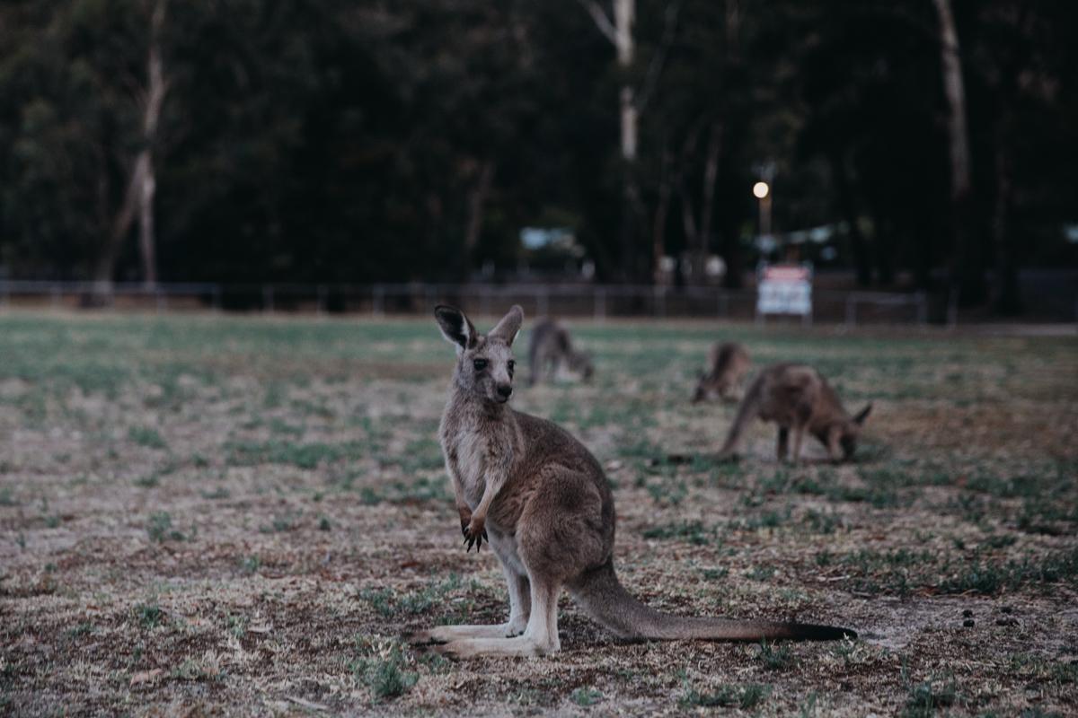 Victoria_Melbourne_Great Ocean Road_Grampians_größer (141 von 218).jpg