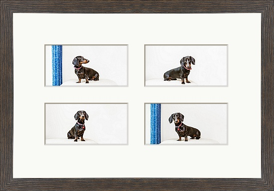 wall items pet photography brighton east sussex