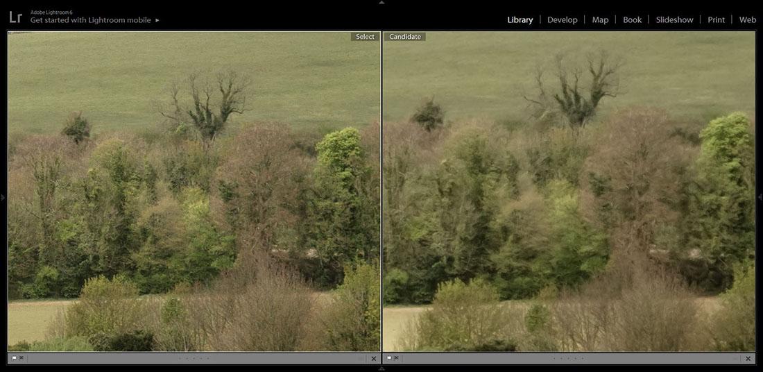 Sony a6300 on the left, vs Fuji XT20 Distant Foliage