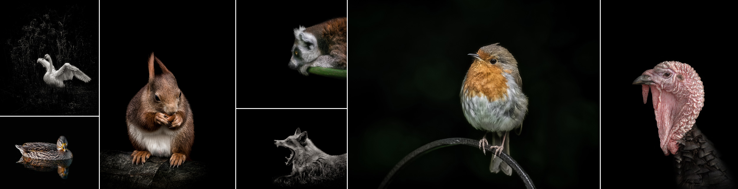 award winning wildlife and nature photographer surrey
