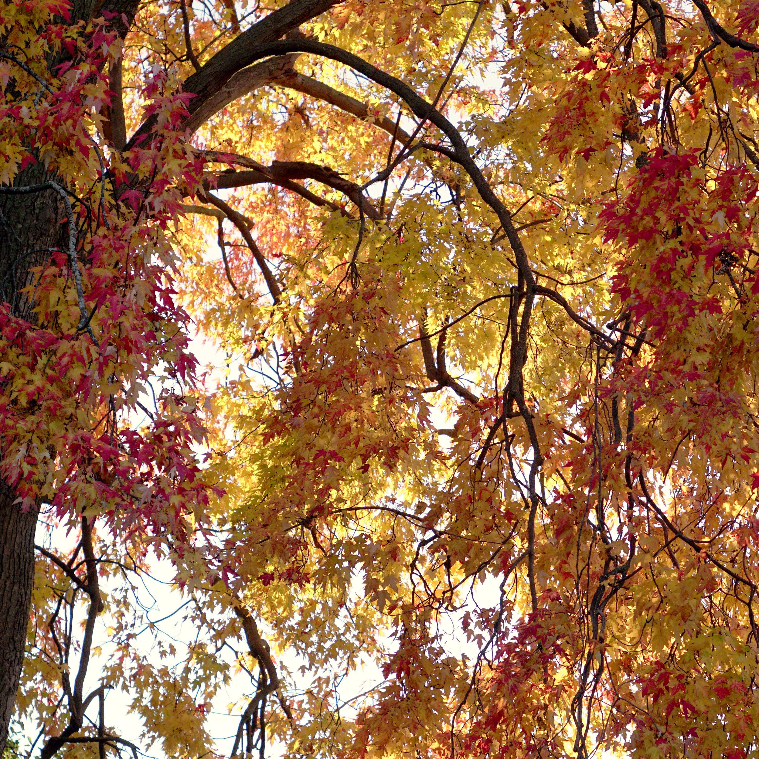 Miles Tree.jpg